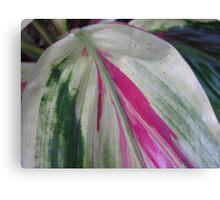Ti Plant Canvas Print