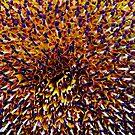 Sam's Sunflower by pedroski