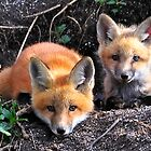 Brother fox by AmyCK