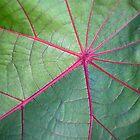 Hot Pink Veined Leaf by Denise McDermott