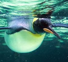 King Penguin by Melanie1980