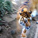 Tiger, Tiger .... by kibishipaul