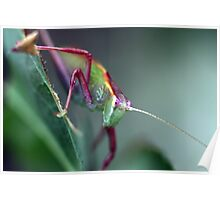 Grasshopper on Leaf Poster