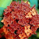 crunchy nut clusters. by alyssa naccarella