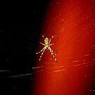 spiderweb by alyssa naccarella