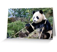 Chop Sticks - Funi   - Adelaide Zoo's Female Panda Greeting Card