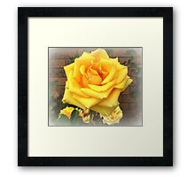 A Rose by any other name - Freesia, Spring 2009  Framed Print