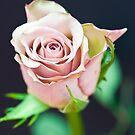 Antique Rose  by Nala