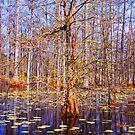 Swamp Scene  by Susanne Van Hulst