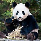 Giant Panda - Funi by Cathy Grieve