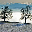 Cozy bench overlooking the Swiss Alps in winter by Michael Brewer