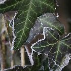 icy leaves by mechelle853