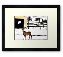 Look Who Came to My Window! Framed Print