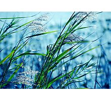Blue Afternoon Photographic Print