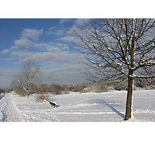 Snowy Common Photographic Print