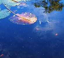 Mt Coot-tha Botanical Gardens Pond with Tortoise. by Virginia McGowan