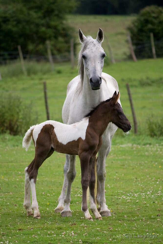 Proud Mother by Gill Langridge