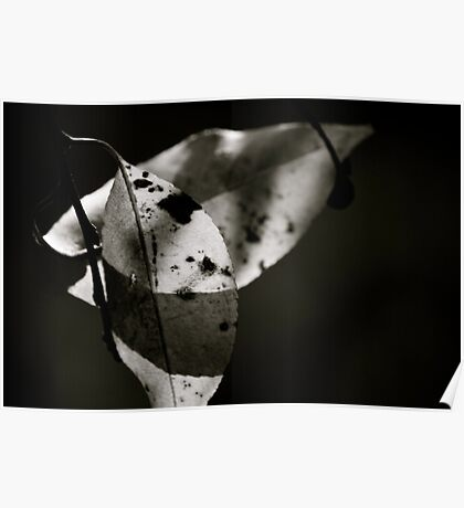 Leaves in Light & Shadow Poster