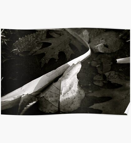 Puddle Leaves in B&W Poster