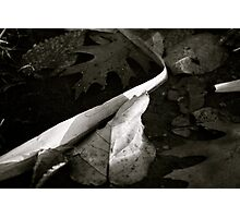 Puddle Leaves in B&W Photographic Print