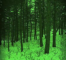 Emerald Forest by linmarie