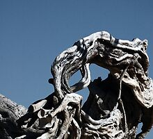 Driftwood, Alicante by onlyalice