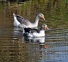 Geese On The Canal by Rod Johnson