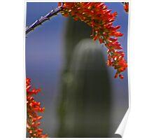 Ocotillo and Saguaro Poster