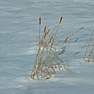 Cattails in Ice by Mike Oxley