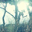 GEGENLICHT / BACK LIGHT II by jamari  lior
