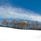 Line of winter trees in the snow under a blue sky by Michael Brewer