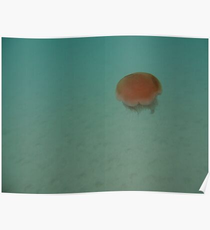 A Lone Jellyfish - Lakeside, Ningaloo Marine Park Poster