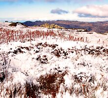 Snow Worms by Kerryn Benbow