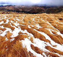 Snowgrass by Kerryn Benbow