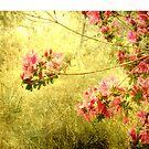Signs of spring by Susanne Van Hulst