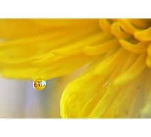 Autumn in A Yellow Mum Photographic Print