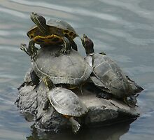 Turtle tower by PouncingAnt