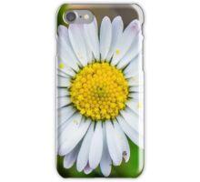 Daisy in a Kentish garden iPhone Case/Skin
