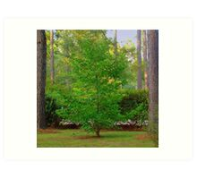 Mother's Front Yard Tree Art Print