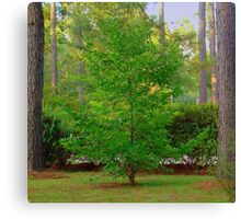 Mother's Front Yard Tree Canvas Print