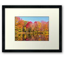 Mallard Duck In Autumn Pond Framed Print