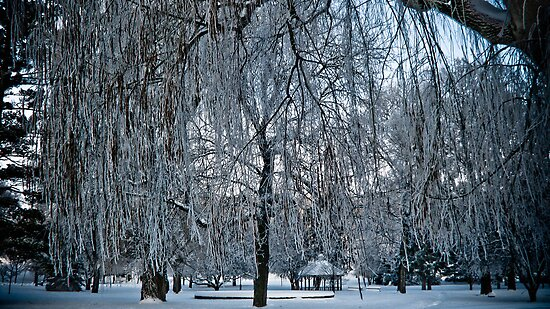 Under The Frosted Willow by swaby