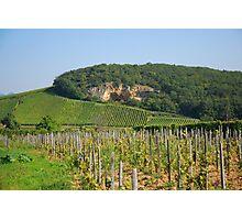 Alsace vineyard Photographic Print