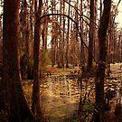 Swamp by Susanne Van Hulst