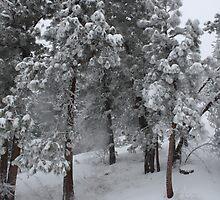 Winter Splendor ! by Sharon Hagler