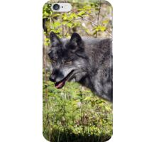 """The Pathfinder"" Grey Wolf Photography iPhone Case/Skin"