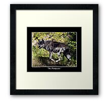 """""""The Pathfinder"""" Grey Wolf Photography Framed Print"""