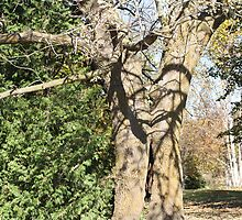 Trees  Hugging by eoconnor