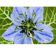 Macro photo of a flower in a Kent garden Photographic Print