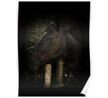 Midnight Beauty-Black Stallion Horse Poster